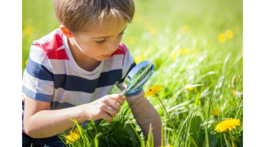 Outdoor Nature Scavenger Hunt for Kids
