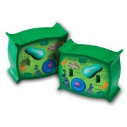 Plant Cell Cross-Section Model