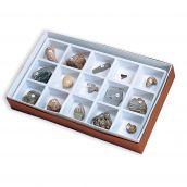 Fossil Collection, Set of 15