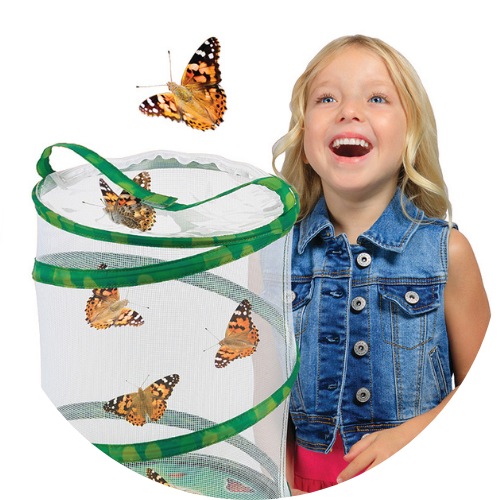 butterfly growing kit for life science